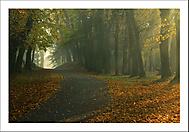 Podzimní ráno 3... (Vlastimil Pibil)