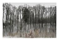 Les v zimě (asile)