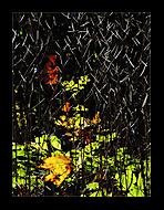 Podzimní - abstraktní... (Vlastimil Pibil)