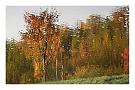 Podzim malířem (asile)