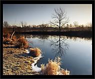 ráno u břehu Dyje (mnovotny1979)