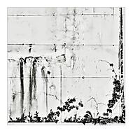 Při zdi (subal)