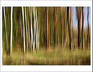 """Kouzelný les""... (Vlastimil Pibil)"