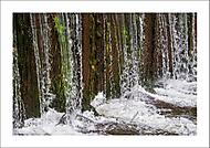 Vodn� abstrakt 5... (Vlastimil Pibil)