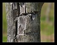 Ostře řezané rysy (Vladimír Smolík)