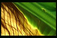 Banánové léstek (Petr Sládek)