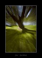 Padající strom (honzj)
