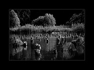Tiché vody I (honzj)
