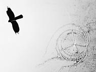 o strachu ptáků (vhumanik)