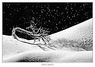 Údolí bobrů (Petr Sládek)