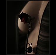 - Rose - (-lubyk-)