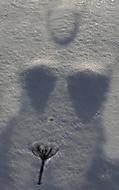 Kamarádka ledových mužů (vaclavbond)