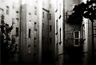 Backyards (wries_Dominik)