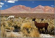Lamy v Bolívii (daniel_linnert)
