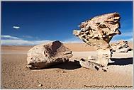 Stone Tree - Bolivia (daniel_linnert)