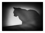 http://galerie.digiarena.e15.cz/data/514/thumbs/chat-noir.jpg