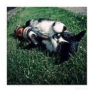 Kočka domací...ehm..prostě tuzemská. (yrka.)