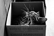 ... kuřecí hamburger .. (lenka k.)