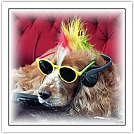 Punk dog (Glogar Pavel)