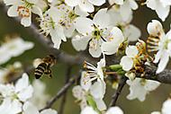 Včielka (Roman110)
