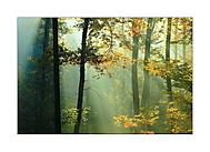 Podzimní ráno (MarekUjcik)