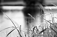 tráva (Jindra H)