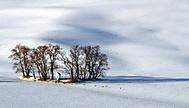 sv Barborka v zimě (Uhler)