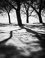 V zimním sadu (sunbird)