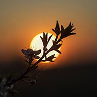Vo večernom slnku (Roman110)