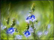 Modraček (Roman110)