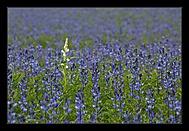 jaro jde pomalu do léta 1 (vladimír N)