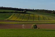 Mistelbach (mduchy)