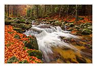 Podzimní Smědá (cevarom)