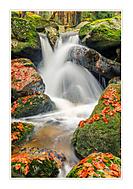 Podzimní vodopadání (cevarom)