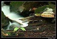U potoka.... (vevercak)