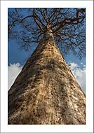 Stromy umírají vstoje... (Vlastimil Pibil)