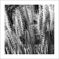 V trávě... (Vlastimil Pibil)