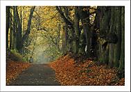 Podzimní ráno 5... (Vlastimil Pibil)