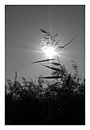 Sluneční hrátky (asile)