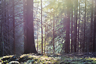 Podve�er v lese (Dendyna)