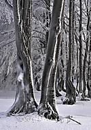 zimn� lesn� (vladim�r N)