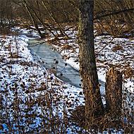 Dalejský potok v zimě. (pajaasek)