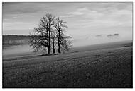 mlha ve Studénkách (stakotr)