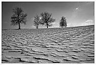 letošní zima na Vysočině (stakotr)
