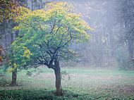 jeseň (landov)