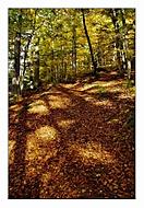 O toulání se spadaným listím (subal)
