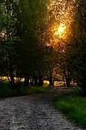 Polní cesta v podvečer (jan.nos)