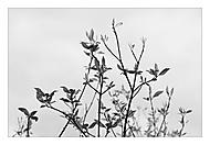 Jarní probouzení (subal)