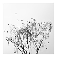 Jedna vlaštovička jaro nedělá (subal)