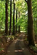 Cesta z lesa (jan.nos)